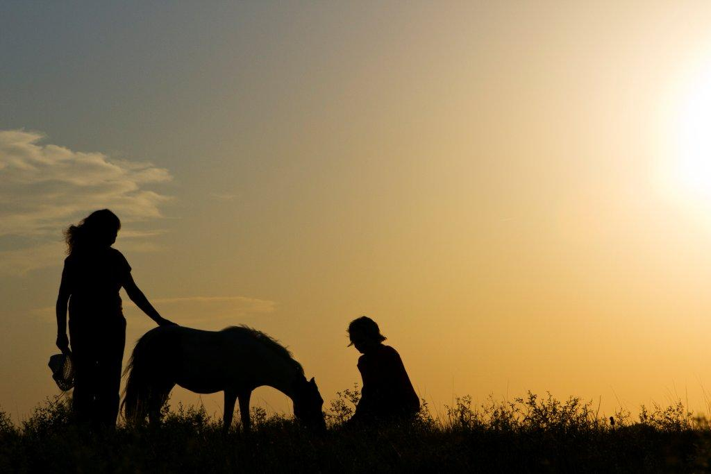 Horses2011 (82)