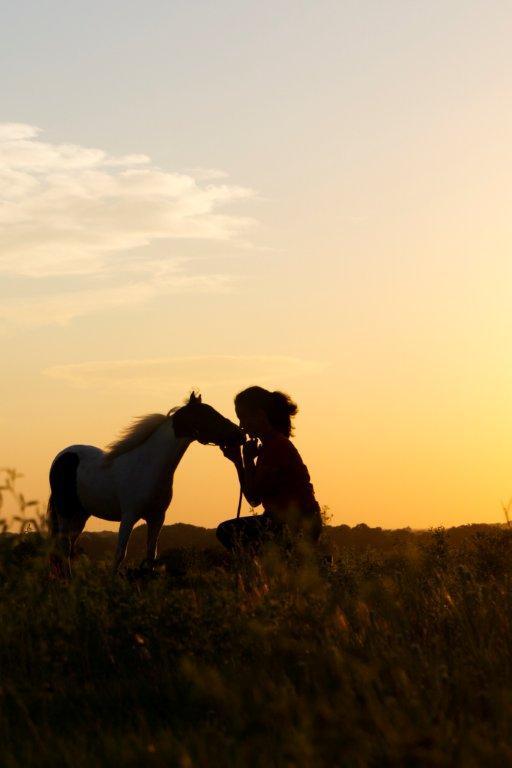 Horses 2011